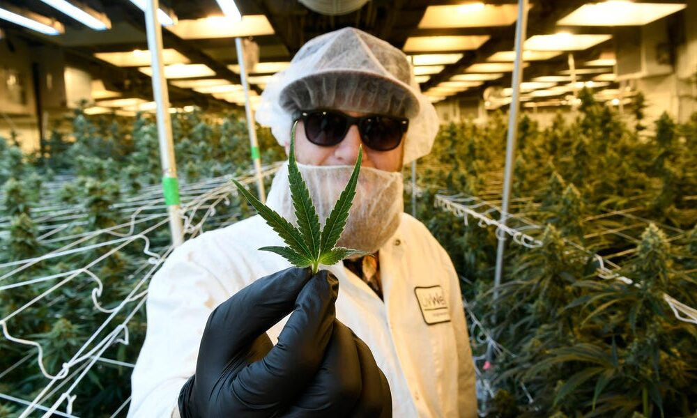 Stock Market Insider Cannabis: New Jersey finally legalizes – New York's top acquisition targets – A flurry of cannabis deals