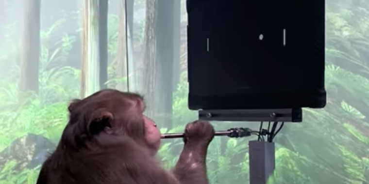 Technology The big advance in Elon Musk's Pong-playing monkey is what you can't see
