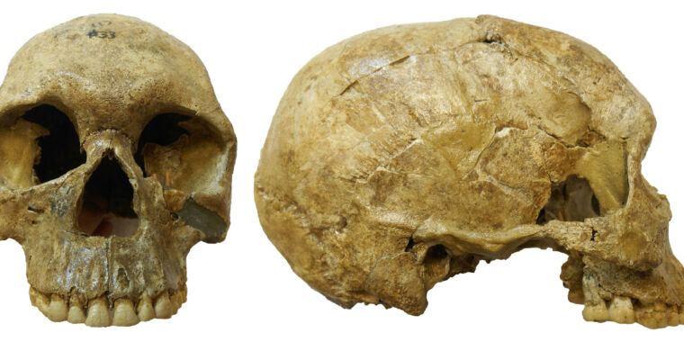 Technology 13,000-year-old skeletons reveal climate-driven warfare in ancient Sudan