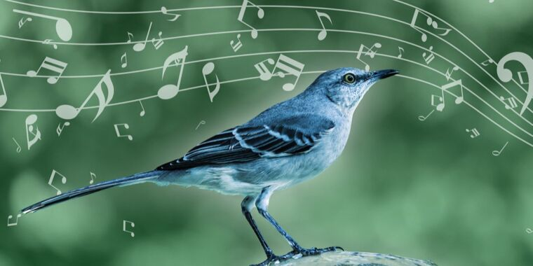 Technology The surprising connection between a mockingbird's song and Kendrick Lamar
