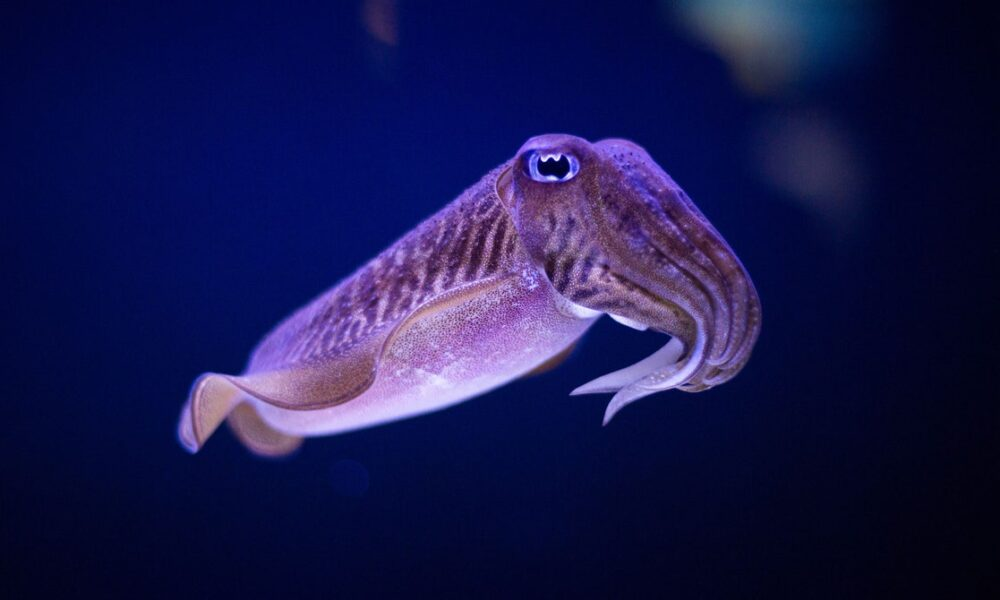 Cryptocurrency  Bitcoin How the Cuttlefish's Robust Memory System Defies Old Age