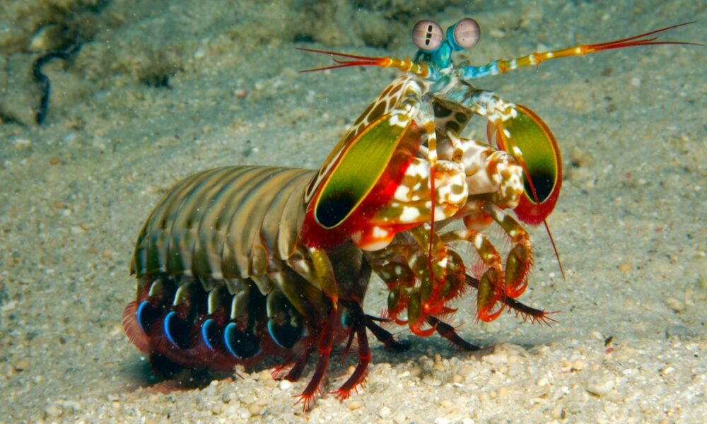 Cryptocurrency  Bitcoin This Tiny Robot Mimics the Mantis Shrimp's Mighty Punch